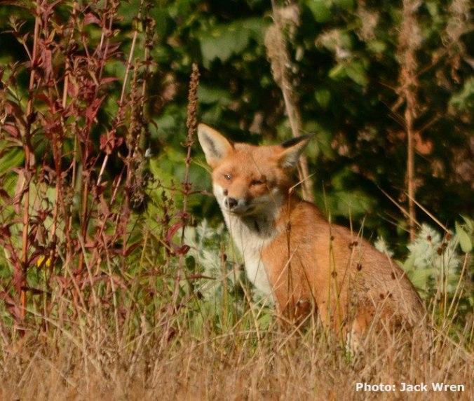 fox800_2_credited