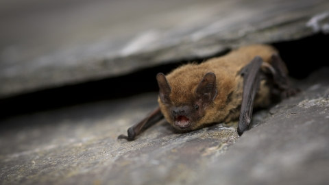 Find out more about bats in Gateshead